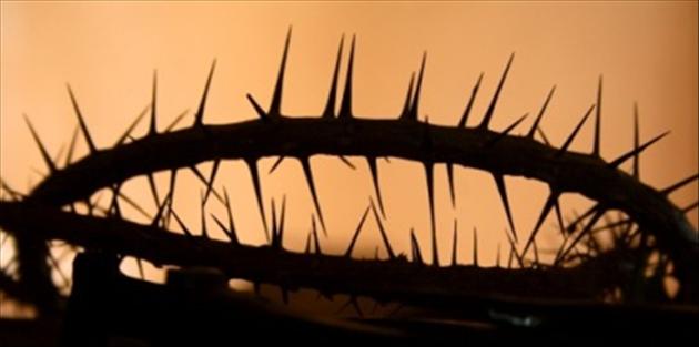 4431-crown of thorns_edited.630w.tn.jpg