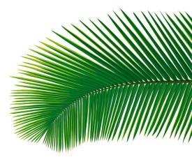 kol_palm